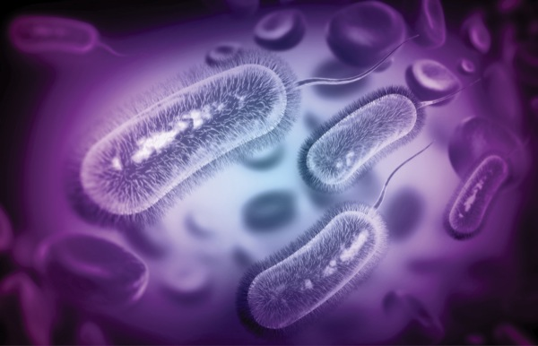 Helicobacter pylori and Nonmalignant Dieseases